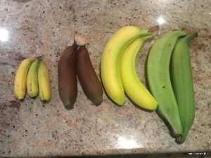 The variety of different bananas I picked up.