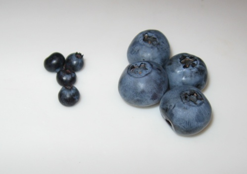 For a bit of comparison you can see the wild blueberries (or are they bilberries? [ http://en.wikipedia.org/wiki/Vaccinium_myrtillus#Confusion_between_bilberries_and_American_blueberries]) next to some that I picked in my parents' garden (this years crop are particularly large)