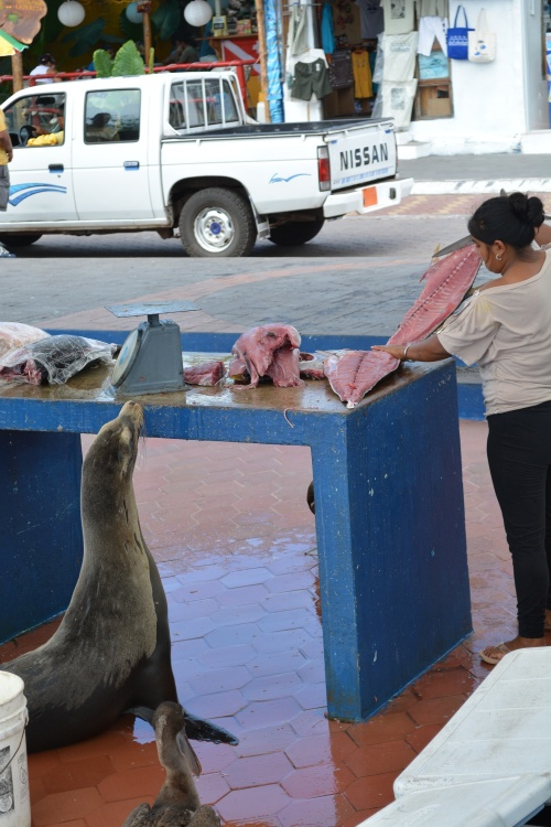 A bit more anthropomorphizing... I imagined this Sea lion waiting for his number to be called at the deli counter.