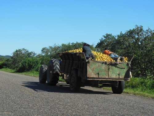 Speaking of Oranges… Talk about something you probably wouldn't see in the states.  These workers were catching a ride as this tractor sped down the highway laden with oranges.  This sight was by no means unusual.