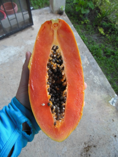 "I've only had papaya a few times before, and I generally find them to be very ""hit or miss"".  This one was certainly a ""hit"" with me, and I devoured it with a few good squeezes of Jamaican lime juice."