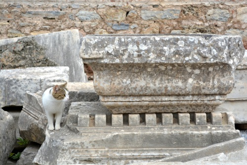 Ephesus (and other sites) was literally crawling with cats.  While people don't keep pets in their house in muslim culture, there are large populations of well fed cats in some public outdoor spaces.  They've actually made a documentary on the cats of Ephesus!