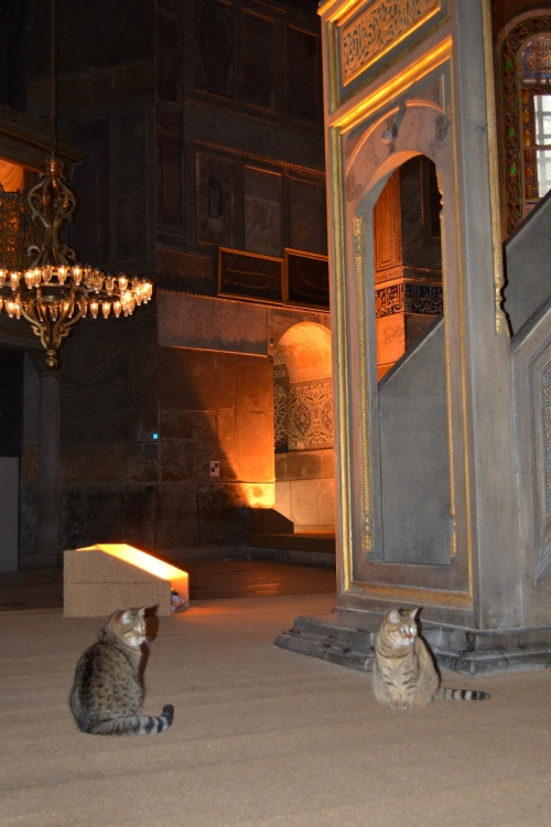Oh, and remember the cats at Ephesus? They were in the Hagia Sophia as well...