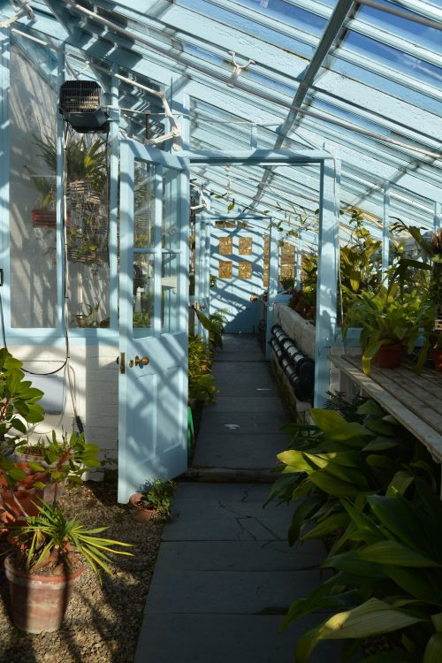 The Hot House at Down House.  A collection of orchids and carnivorous plants are maintained here.  This is where Darwin hypothesized that the orchid Angraecum sesquipeda was pollinated by moth with a long proboscis.  This was discovered to be true, 21 years after Darwin's death.