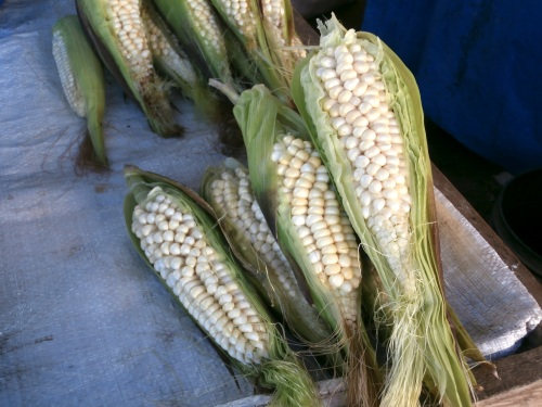 Corn generally looks quite a bit different as well.  I don't think Monsanto had anything to do with these ears!