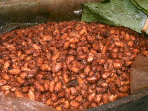 Beans ferment for a few days to a week, depending on the temperature.  They are wrapped in banana leaves to conserve heat.