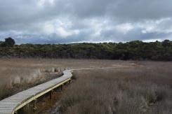 An estuary walk
